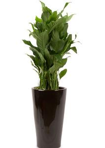 실내관엽식물 스파트필름
