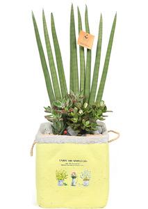 스투키와 공기정화식물