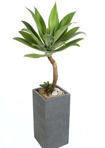 아가베 고급사각 실내관엽식물