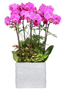 승진축하선물 핑크호접