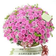 핑크장미100송이 특