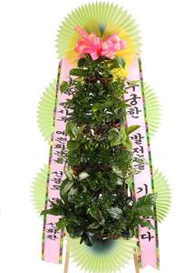 꽃식물화환=>100%국산 생화