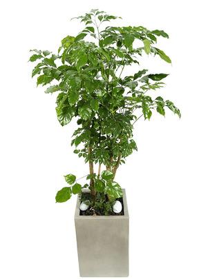 부기수-실내공기정화식물