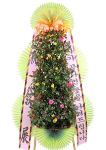 장미꽃 포트식화환