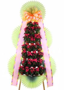 포인세티아 핑크 축하화환