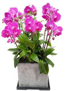 핑크호접-사각 개원선물