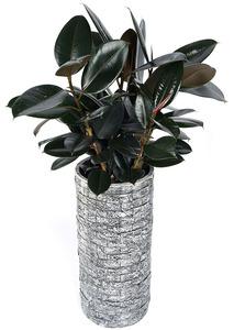 흑고무나무-둥근원형마블
