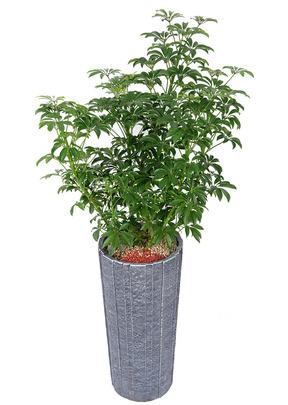 미니홍콩야자-원형
