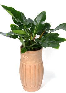 실내공기정화식물 콩고-마블