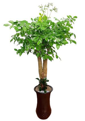 해피트리-행복나무