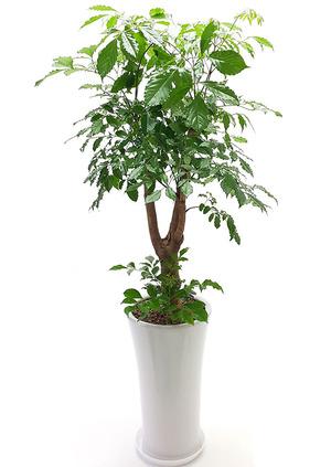 행복나무-해피트리백자