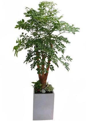 해피트리VIP-행복나무