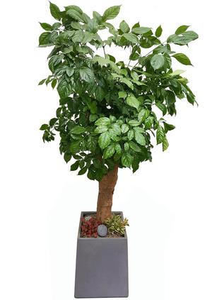 행복나무-목대특