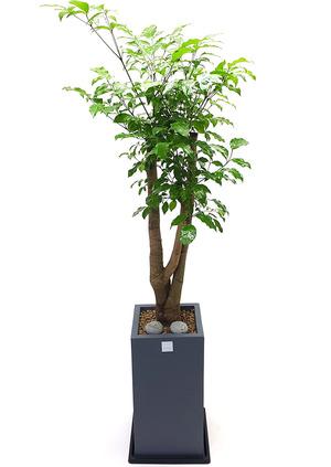 행복나무-해피 개업축하화분