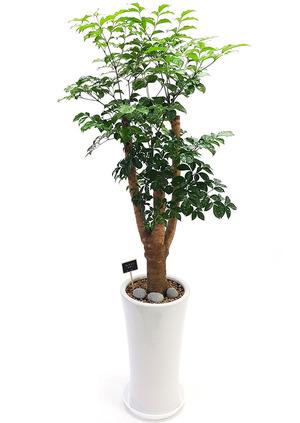 해피트리목대 까페개업선물