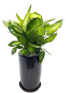 마리안느 실내공기정화식물