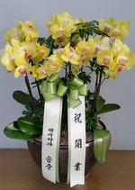 개업축하난 한국 미니썬셋