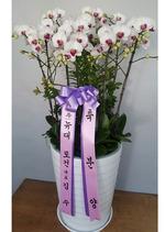 대박기원 남동 화이트