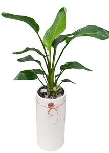 공기정화식물 극락조원형