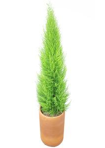 율마토분 공기정화식물