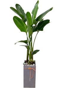 공기정화식물 극락조