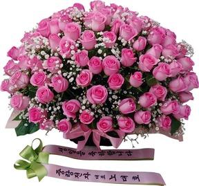 핑크와안개 100송이장미