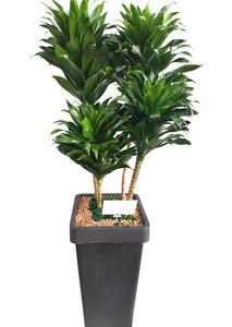 실내인테리어식물 콤펙타