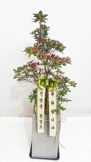 관엽식물(실내사무실&가정)