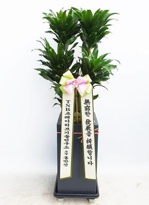 관엽식물(실내사무실&가정) 콤펙타