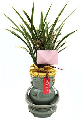 황금채홍꽃대-축영전