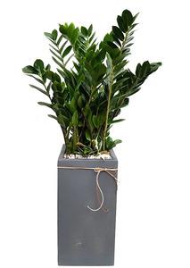 금전수사각-실내식물