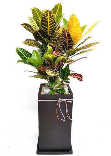 크로톤-실내관엽식물