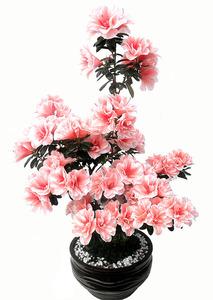 철쭉-아젤리아연핑크
