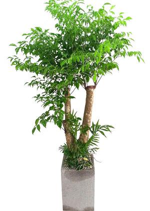 해피트리 고급분-행복나무